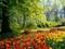 طبیعت بهار و گلهای لاله