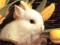 تصویر خرگوش ناز
