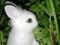 نازترین بچه خرگوش سفید جهان