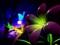 عکس گل و پروانه سه بعدی