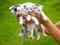 عکس بچه گربه های ناز