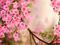 زیباترین شکوفه های بهاری صورتی