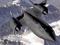 سریعترین هواپیمایی شناسایی جهان