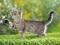 عکس بچه گربه خاکستری ناز