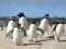 عکس جالب مسابقه پنگوئن ها