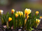 رویش گل در فصل بهار
