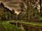 منظره رویایی رود در جنگل