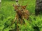 بچه آهو ها در جنگل