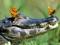 عکس تمساح و پروانه ها