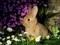 عکس خرگوش ناز میان گل ها