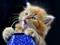 عکس بچه گربه ناز و ملوس جدید