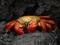 عکس خرچنگ دریایی بزرگ