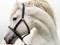 والپیپر سر اسب سفید