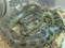 آناکوندا بزرگترین مار دنیا