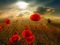 پس زمینه دشت گل شقایق