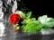 شاخه گل رز مصنوعی