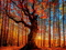 نقاشی جنگل پاییزی بسیار زیبا