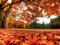 فرش برگ درختان پاییزی