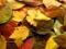 عکس برگ های پاییزی