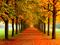 برگ های پاییزی روی جاده