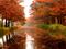 طبیعت پاییز بارانی زیبا