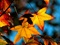 والپیپر برگ پاییزی