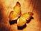 زیباترین عکس های پروانه ها
