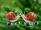 صحنه های زیبای عاشقانه حلزونها