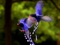 عکس های دیدنی پرندگان بهشتی