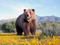 خرس خیلی بزرگ