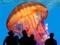 عکس بزرگترین عروس دریایی