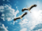 عکس پرواز لک لک ها در آسمان