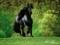 عکس اسب سیاه زیبا