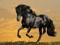 اسب سیاه باوقار