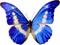 پروانه آبی زیبا