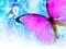 پوستر پروانه بنفش