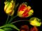 زیباترین عکس گل های زرد جهان