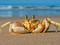 خرچنگ دریایی روی شن ساحل