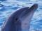 عکس دلفین تربیت شده
