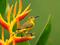 عکس زیبای پرندگان