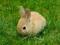 خرگوش کوچولو در چمن سبز