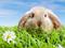 خرگوش تپل سفید