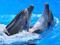 نمایش دلفین ها