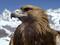 عقاب پرنده شکاری