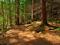 والپیپر جنگل های شمال