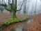 منظره جنگل مه آلود پاییزی