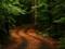 والپیپر زیبا از جنگل
