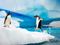 پنگوئن جنتو قطب جنوب