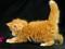 عکس بچه گربه بامزه پشمالو