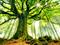 عکس درخت سرسبز و کهنسال